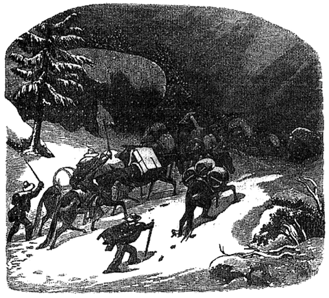 A pack train makes its way through a snow storm in a wood engraving after a design by Charles Nahl, 1856. Packers and their mules encountered a variety of dangers in carrying supplies to mining camps, but winter trips were especially hazardous. When a tremendous storm caught one train between Grass Valley and Onion Valley, all but three of forty-five mules perished before the snows lifted.  California Historical Society, FN-30968 .