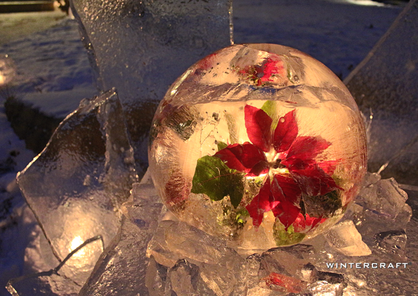 Poinsettia frozen into Globe Ice Lantern