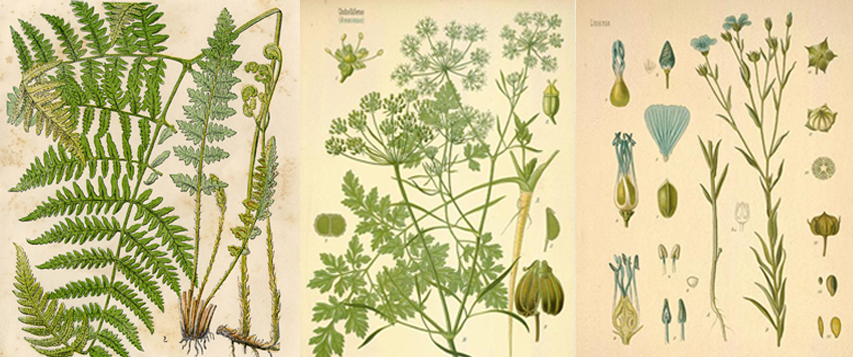 Urban Garden Botanical prints