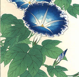 Kawarazaki Shodo - F60 Asagao (Morning glory) - Free Shipping