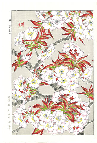 Kawarazaki Shodo - F20 Somei Yoshino (Cherry Blossoms) - Free Shipping