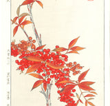 Osuga Yuich - F181 Nanten (heavenly bamboo) - Free Shipping