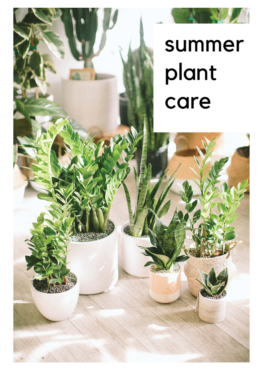 Summer Plant Care