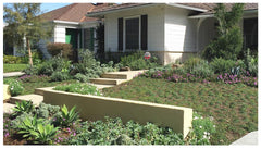 Wildflora Los Angeles Ventura Blvd Studio City California landscape design architecture architect residential home office shop garden construction yard plants Mike Michael Scholtz walks groundcover steps wall alternative lawn kurapia foxtail agave attenuata
