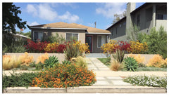 Wildflora Los Angeles Ventura Blvd Studio City California landscape design architecture architect residential home office shop garden construction yard plants Mike Michael Scholtz warm color grass sidewalk lush red yellow orange