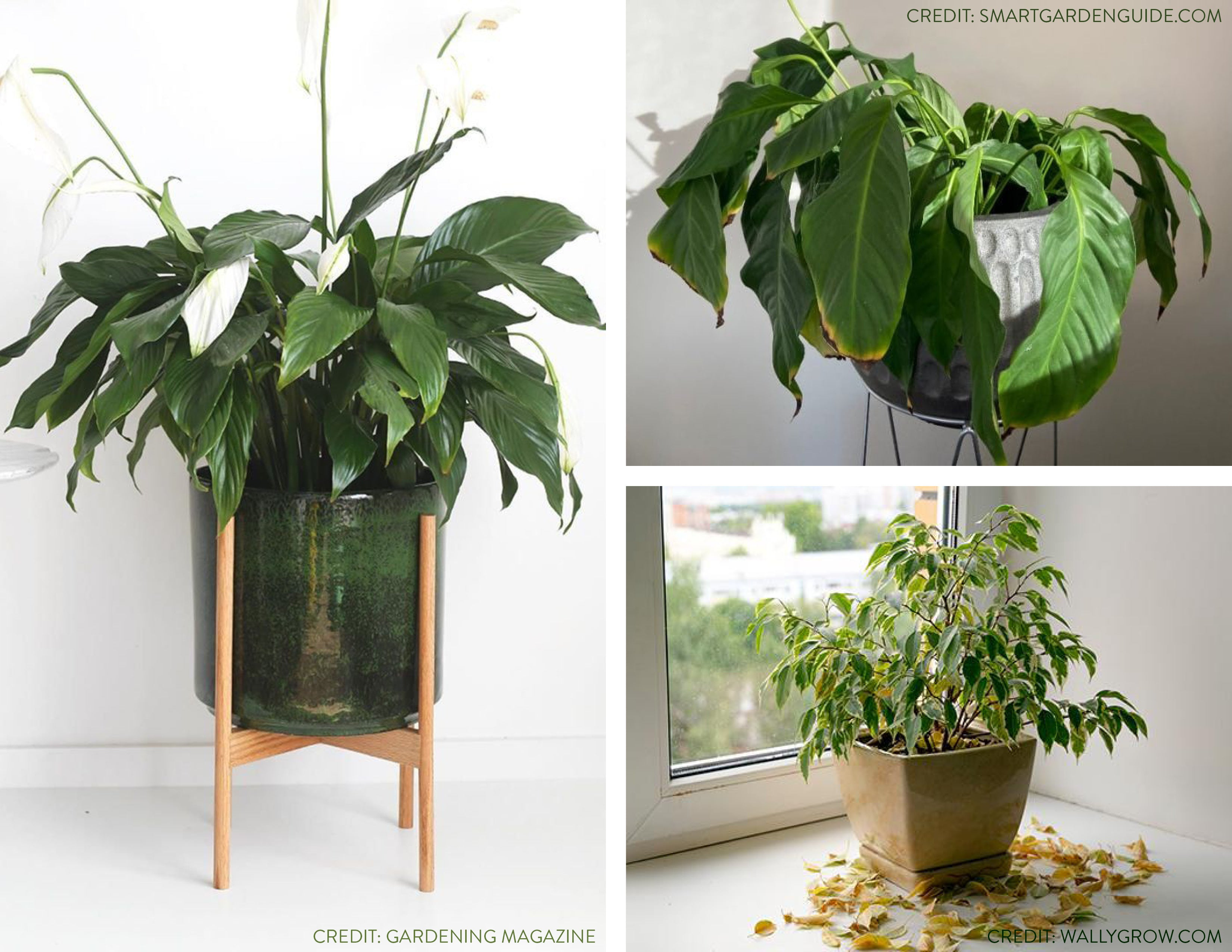 plant mistakes wildflora tips watering over under too much little light pot