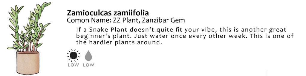 Wildflora house plant green propagation light sun water leaf leaves sketch drawing zamioculcas zamiifolia common name zz plant zanzibar gem beginner easy