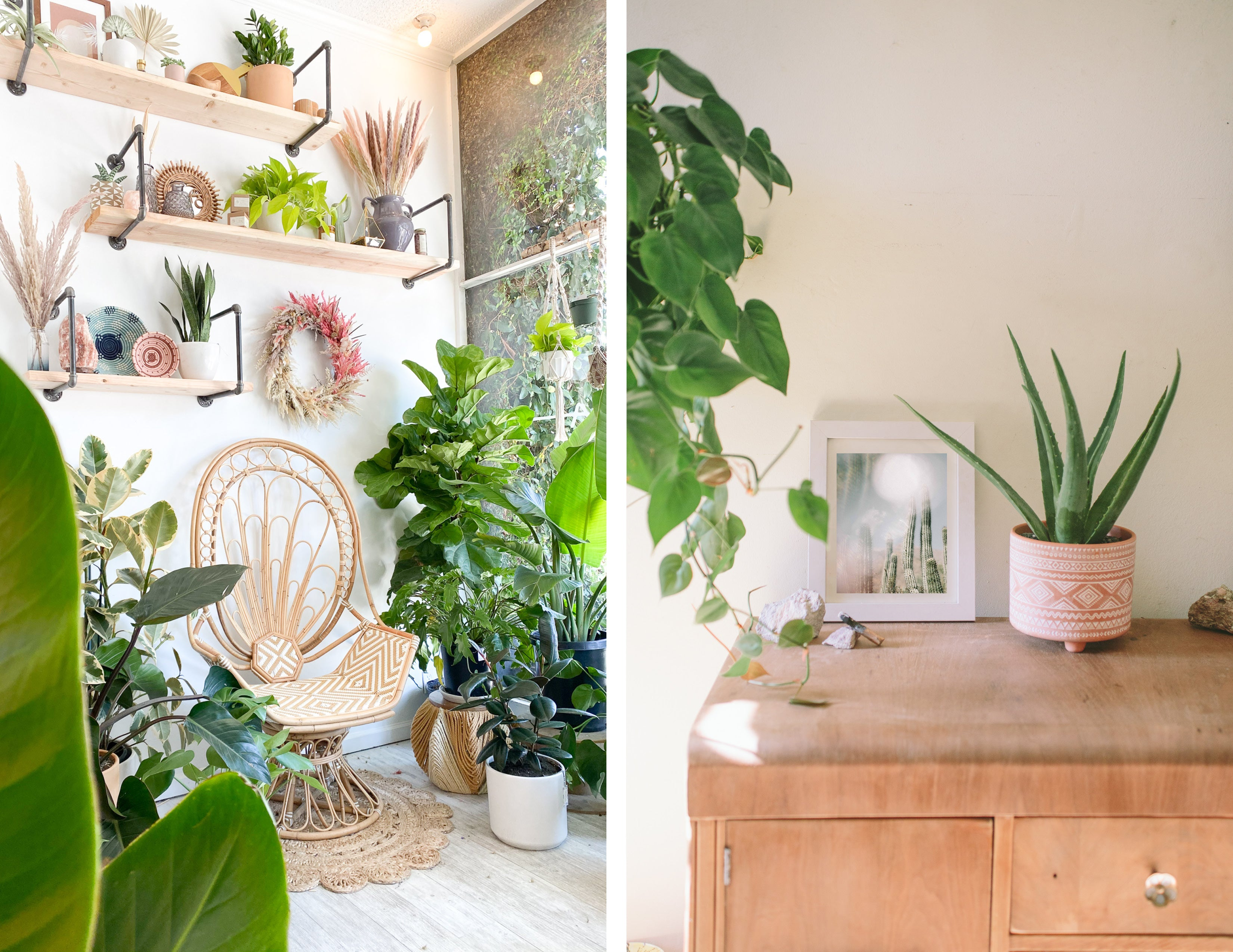 styling home house plant size retro antique chair wildflora los angeles studio city aloe hanging pothos philodendron