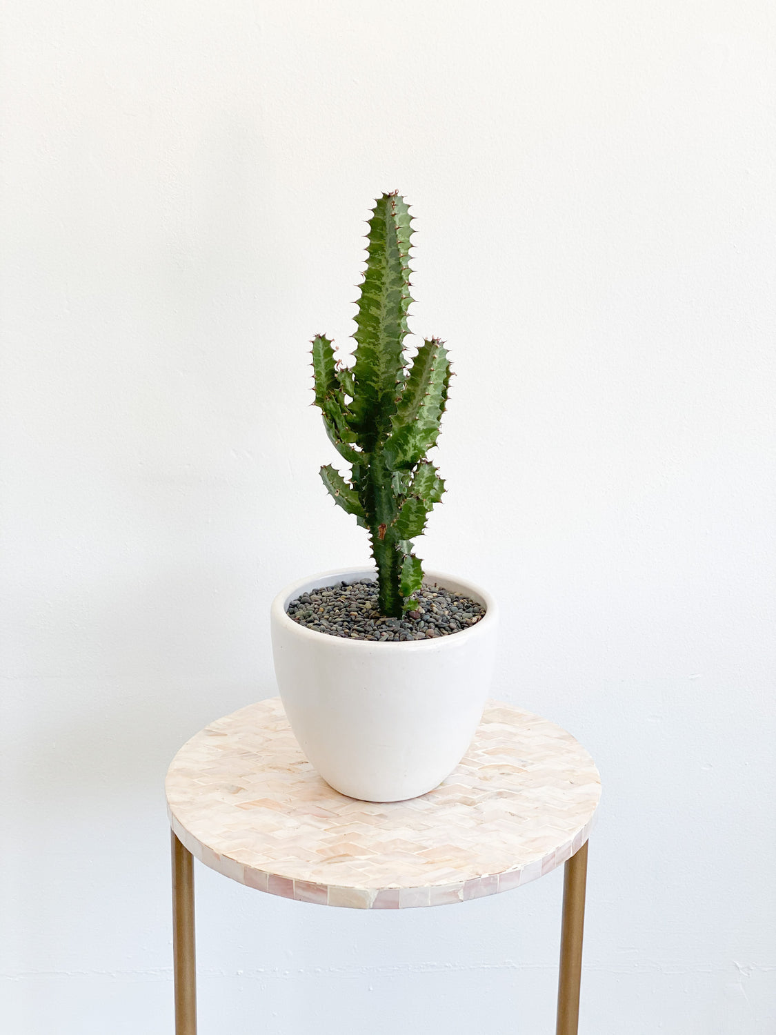Cactus in Matte White Bell Pot