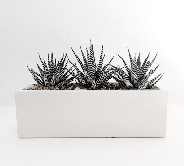 Wildflora Los Angeles florist Ventura Blvd Studio City white planter succulent gravel simple modern clean fresh