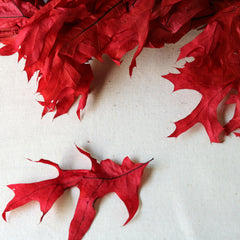 Preserved Red Oak Fall Leaves