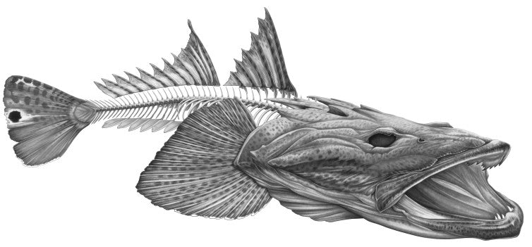 Fishwreck S Artist Nick Laferriere S Awesome Flathead