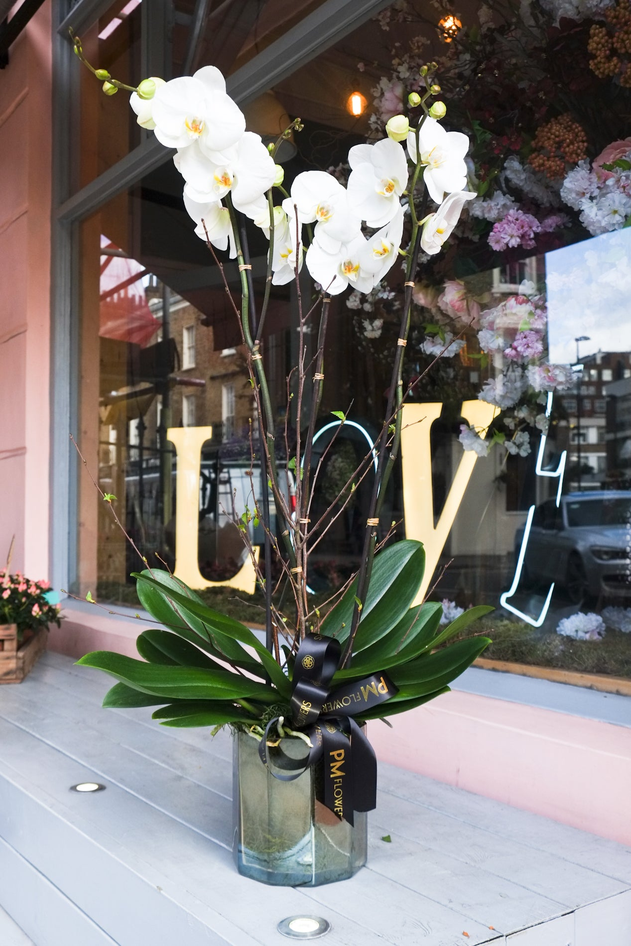 large tripple stemmed white phalaenopsis orchid plant in a hexagon lantern