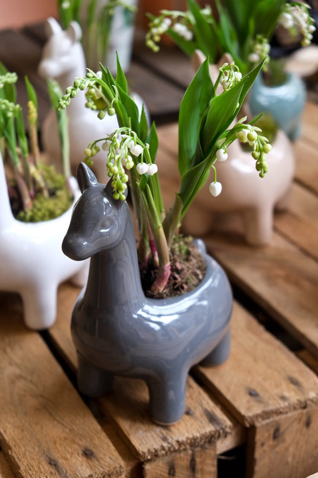 Lily of the Valley Llama