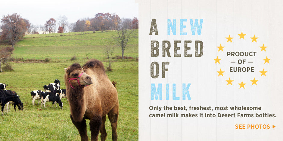 Camel milk is a product of EU