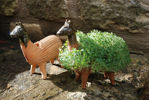 Grow your own llama including cress seeds