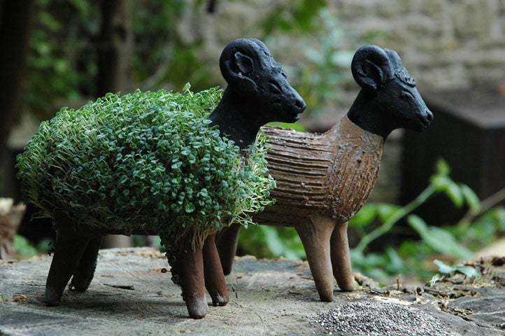 Grow Your Own Sheep Including Cress Seeds Tumi Retail