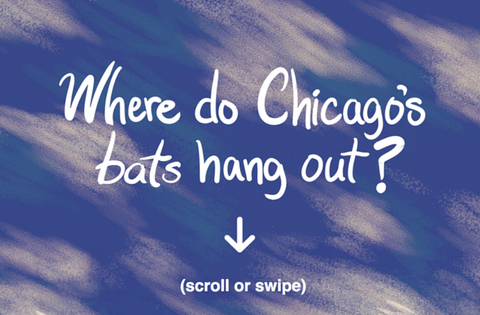 Where do Chicago's bats hang out?, United States