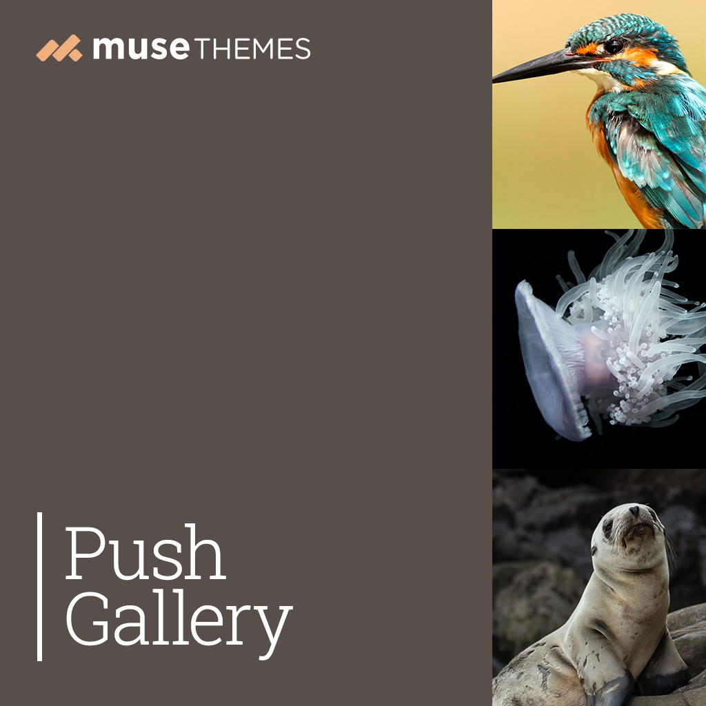 Push Gallery Adobe Muse Widget