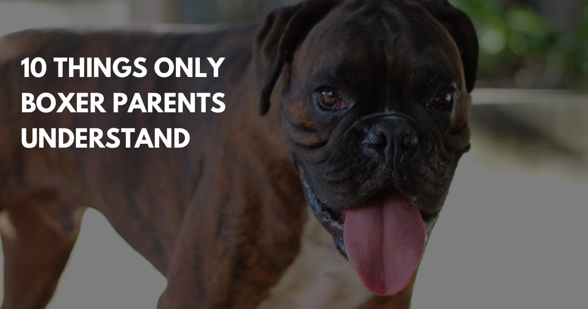 10 Things you have to be a boxer parent to understand.