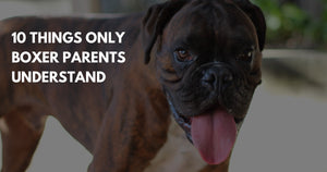 10 Things Only Boxer Moms Will Understand