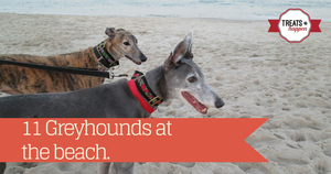 11 Greyhounds on the beach.