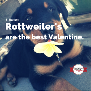 11 Reasons to make a Rottweiler your Valentine