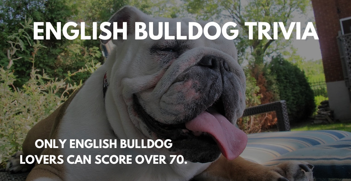English Bulldog Trivia