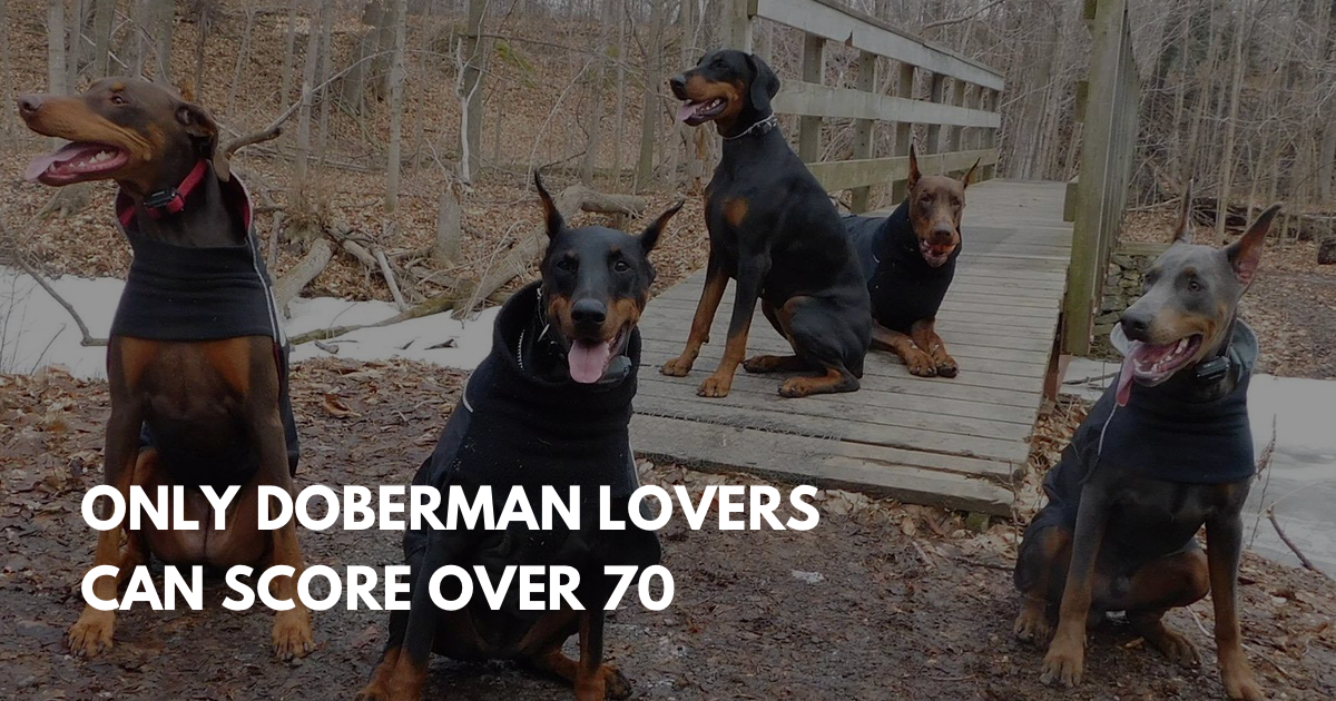 Doberman Pinscher Trivia | 10 Fun Facts about Dobermans