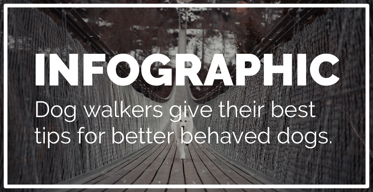 INFOGRAPHIC 19 Dog Walkers Give Practical Tips on How To Have a Better Trained Dog