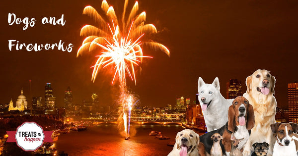 Dogs and Fireworks: Tips for keeping your dog happy and calm during fireworks