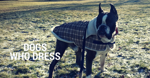 10 Dogs with cooler winter jackets than you.