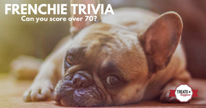 Frenchie Trivia | How well do you know French Bulldogs?