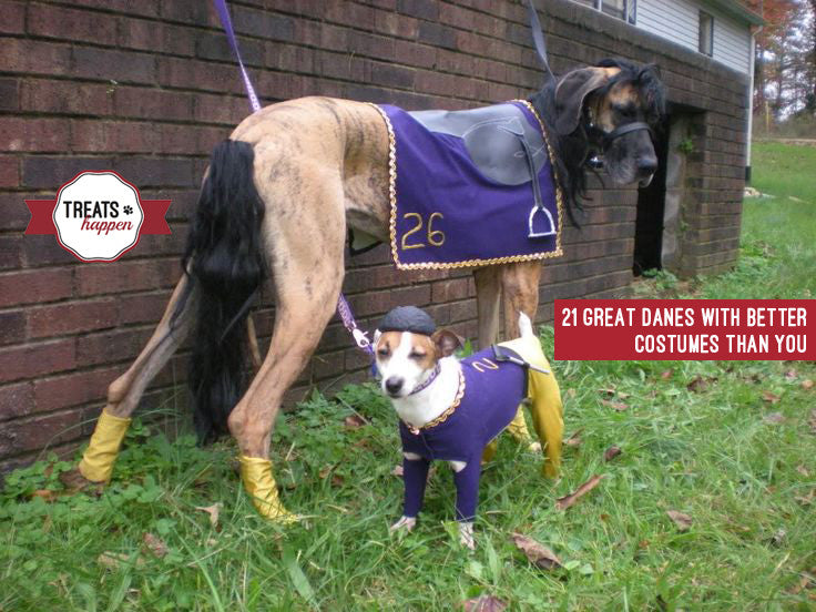 21 Great Danes with better costumes than you.