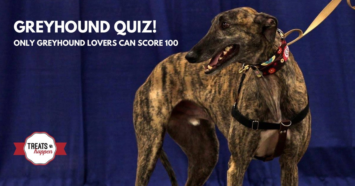 Greyhound Trivia - How well do you know your Greyhound?