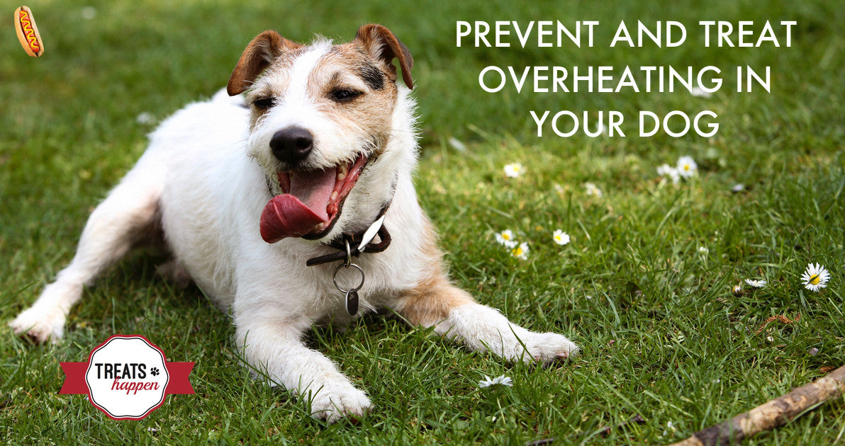 Prevent and treat overheating in your dog. It could save their life
