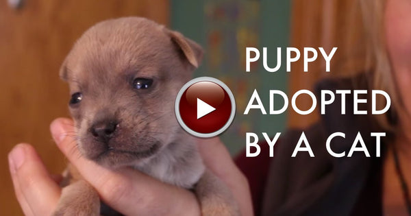 VIDEO You won't believe who adopted this newborn puppy.