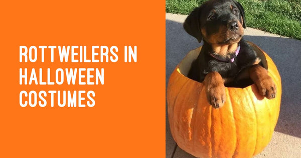 Rottweiler Halloween costumes - Some of the greatest pet costumes ever