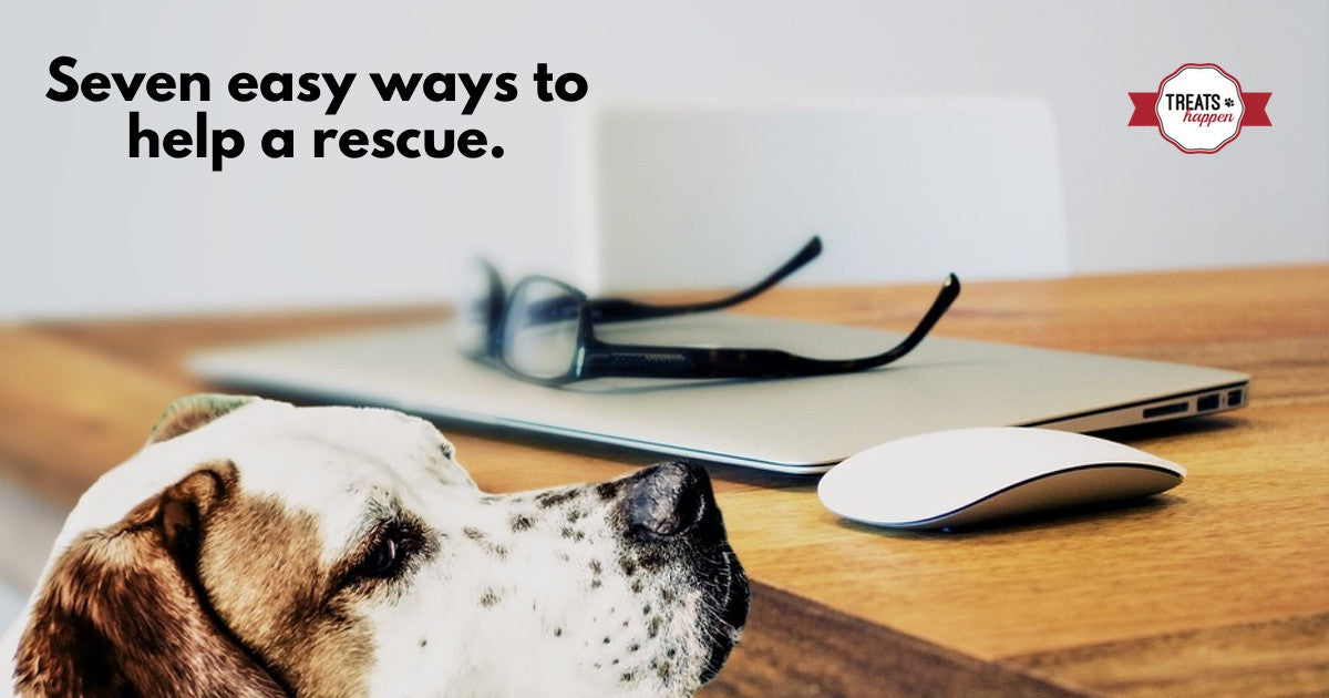 7 ways you can make a difference with your favourite rescue