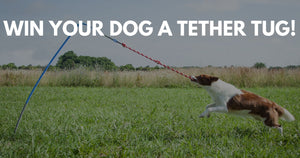 Dog Days of June Tether Tug Giveaway