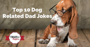 Top 10 Dog Related Dad Jokes for Father's Day