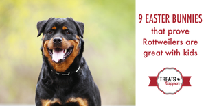 9 Easter bunnies that prove Rottweilers are great with children