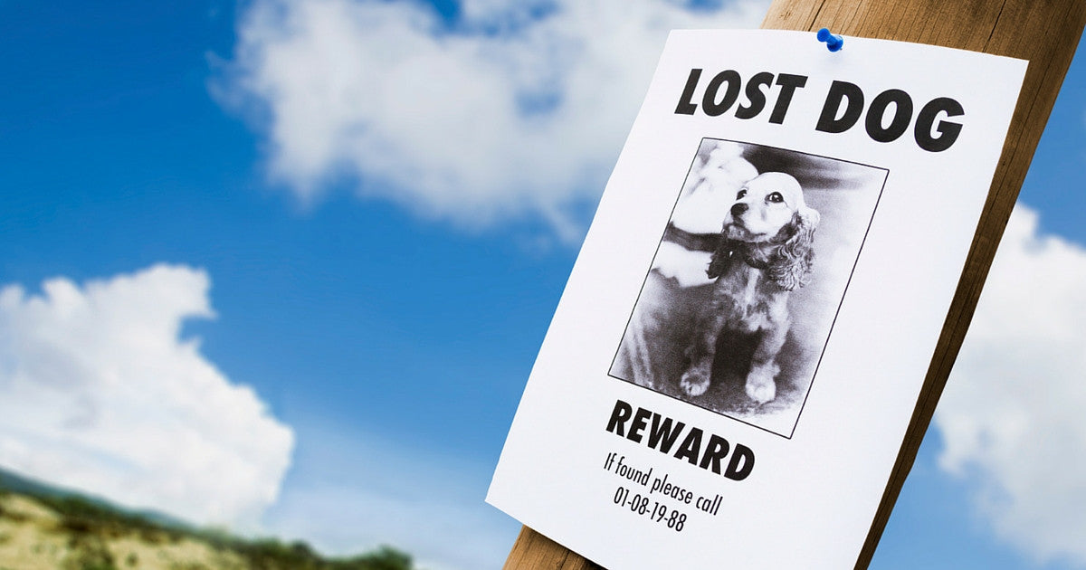 how to make a lost dog poster
