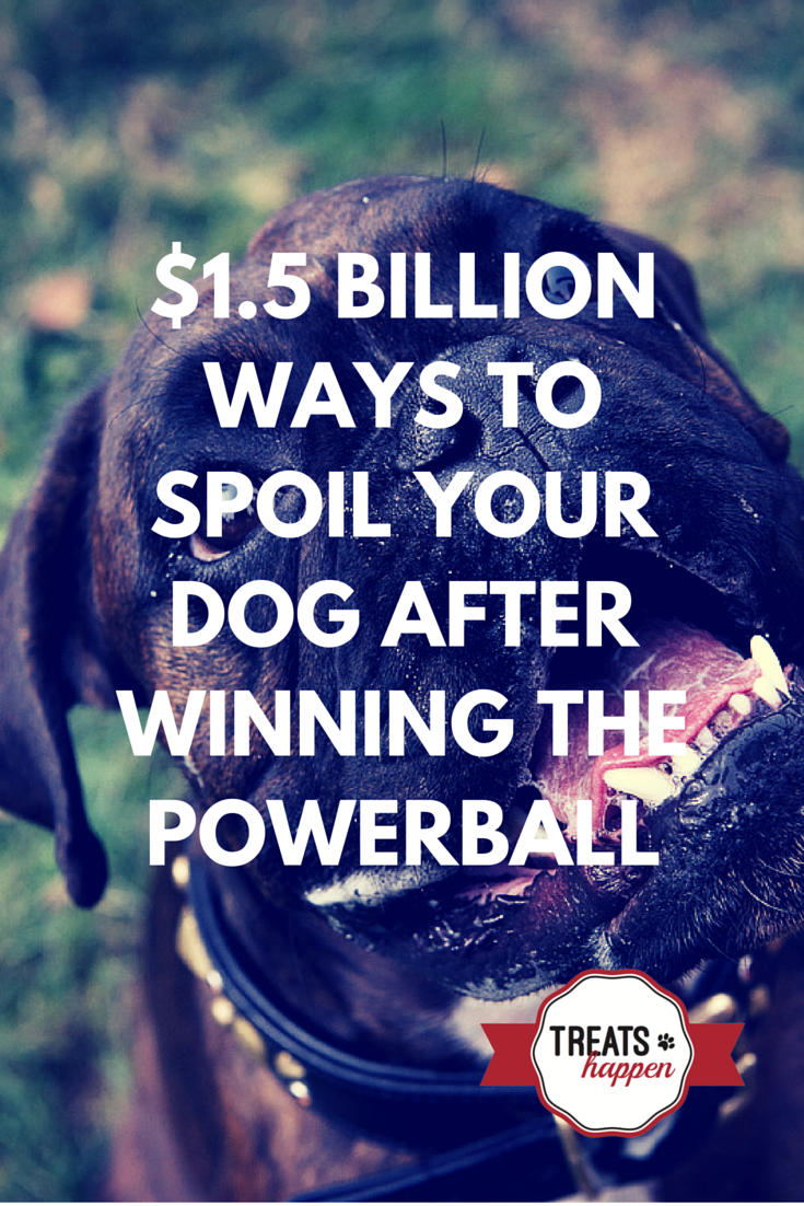 11 Ways our dog's lives would change if we won the Powerball.