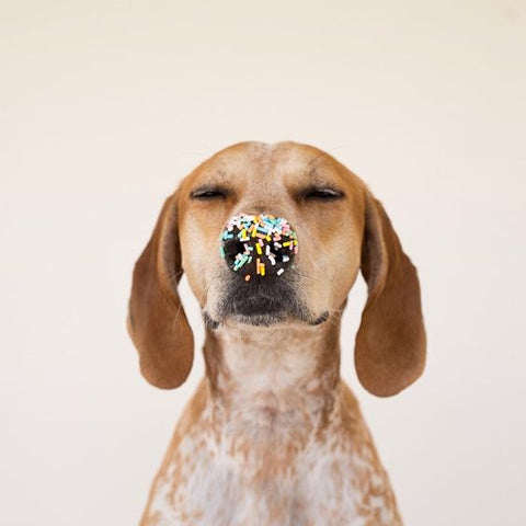 Dog with sprinkle nose