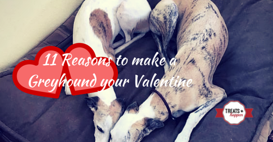11 Reasons to make a Greyhound your Valentine