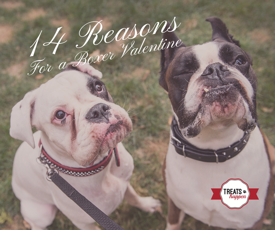14 Reasons for a Boxer Valentine