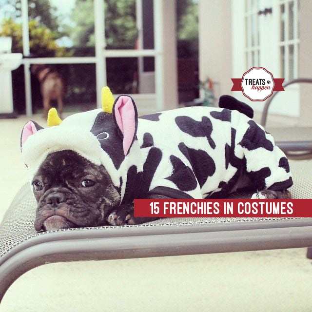 15 Frenchie Halloween Costumes