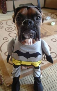 Batman And Robin Dog Halloween Costumes