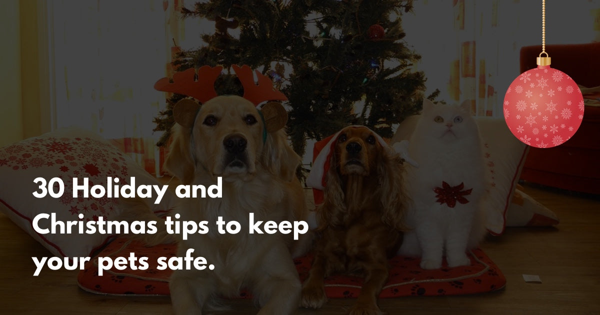 30 Tips to keep your pets happy and safe during the holidays